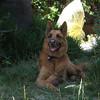 My buddy <b>Django</b>, best dog ever. My buddy <i>Django</i>, best dog ever. My buddy Django,  best dog ever.