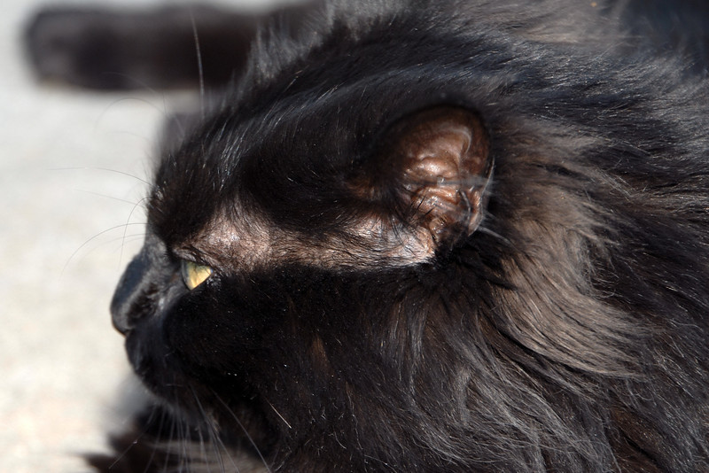 20110717_Cats_014_out
