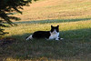 20110717_Cats_023_out
