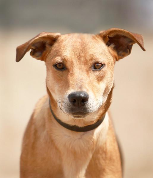 ADOPTION-Second Chance Animal Shelter