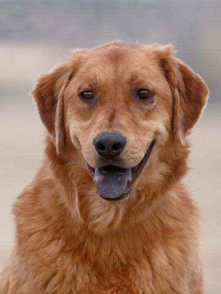 ADOPTION--Second Chance Animal Shelter