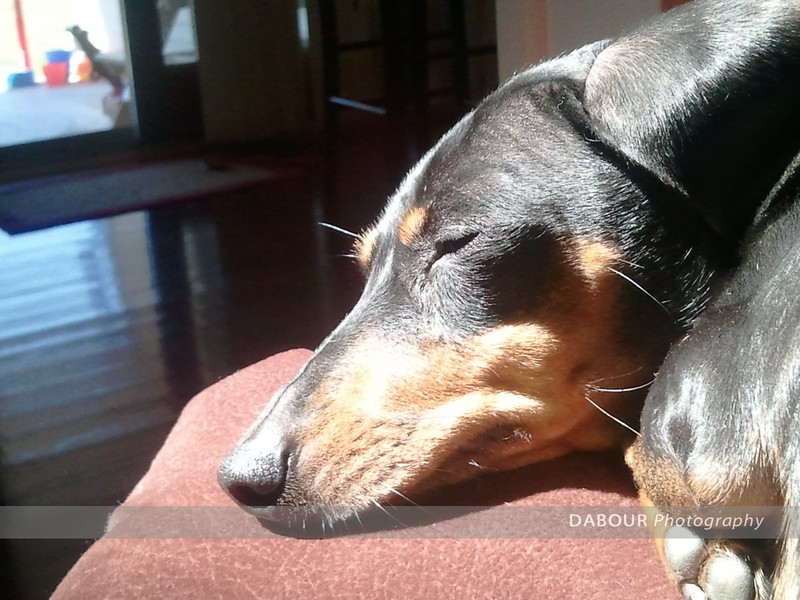 Nothing like a warm sunny spot for a nap!