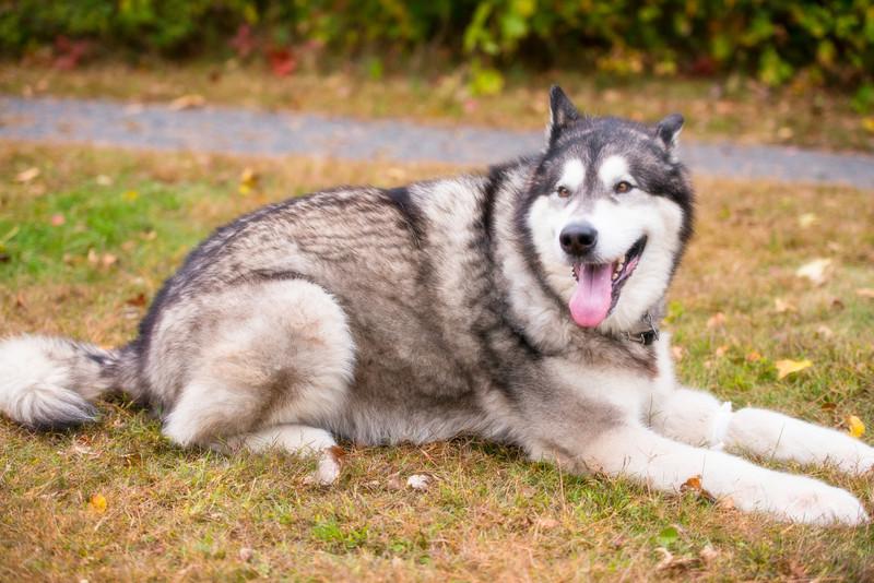 doghikesoft (108 of 283)