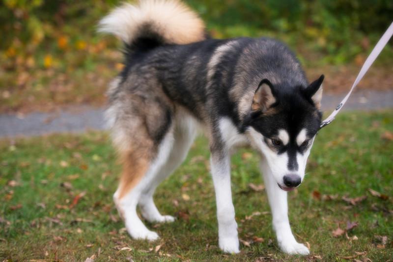 doghikesoft (134 of 283)