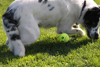Dog Park 0905