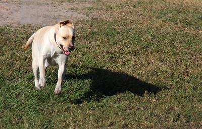 DogPark11.13-4863
