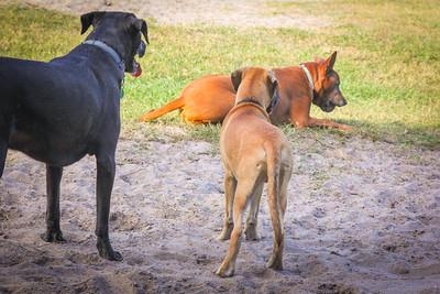DogPark110313-3417