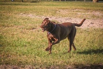 DogPark110313-3399
