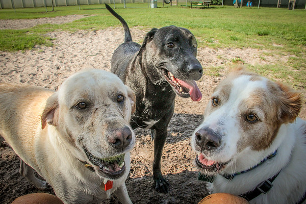 Meadows Dog Park, Events and Walks, New Port Richey FL, July & August 2014