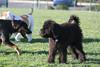 Dog Park 079