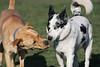 Dog Park 067