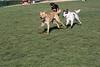 Dog Park 048