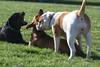 Dog Park 055