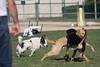 Dog Park 050