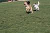Dog Park 047