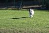 Dog Park 087