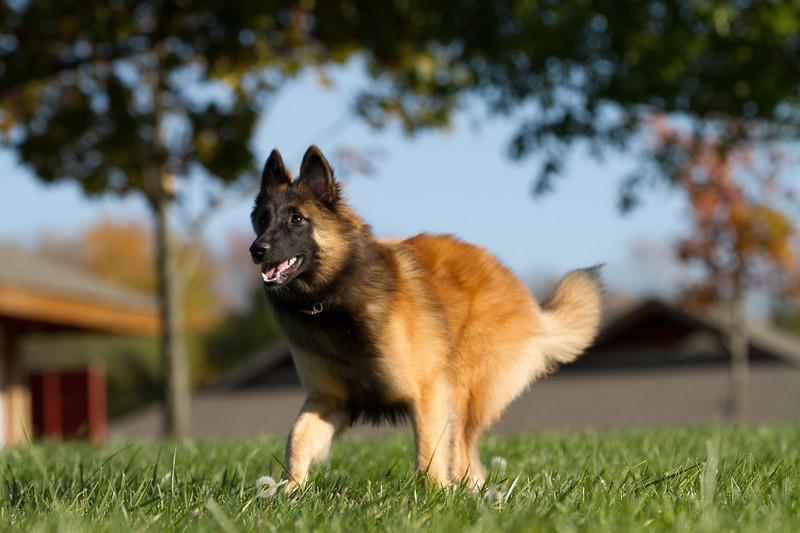 111025-dog-sedona-0585