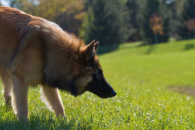 111025-dog-sedona-0574