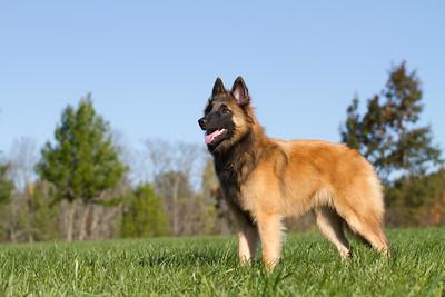 111025-dog-sedona-0593