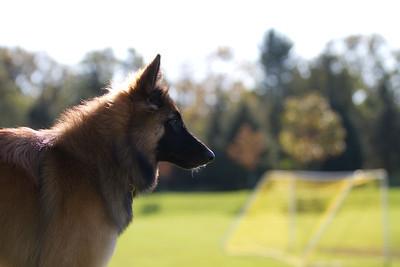111025-dog-sedona-0579