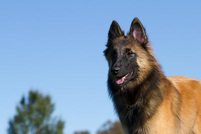 111025-dog-sedona-0564