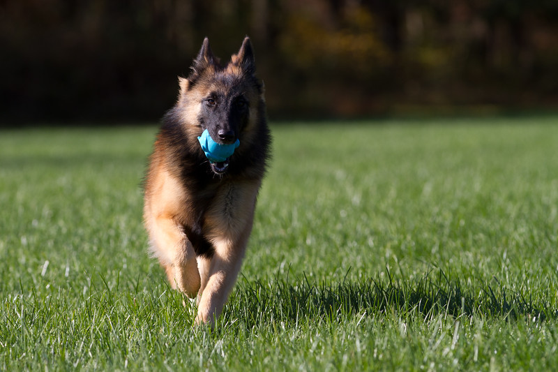 111025-dog-sedona-0627