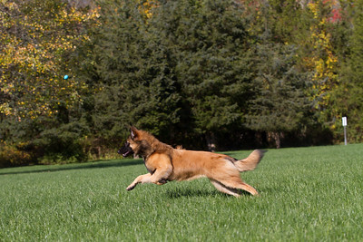 111025-dog-sedona-0644