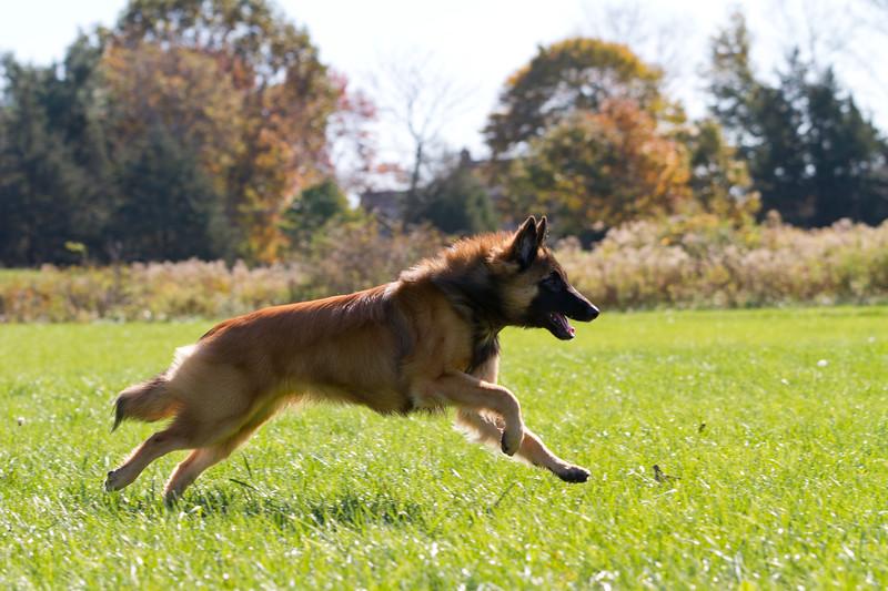 111025-dog-sedona-0894