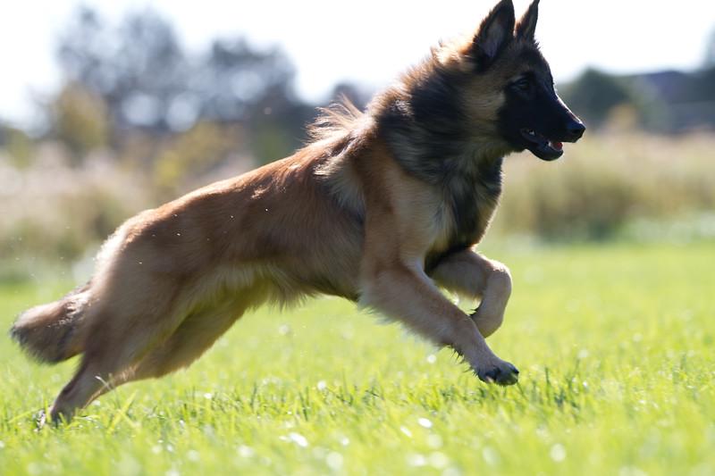 111025-dog-sedona-0810