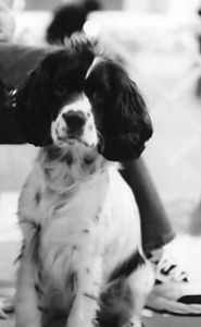 Taken at Elk River Canine Training Center, May, 2005.