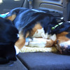 Linus & Roxy passed out in the car