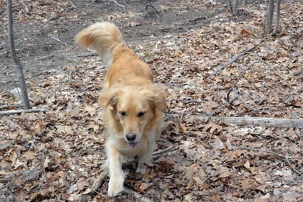 Dog Walk April 23 2015