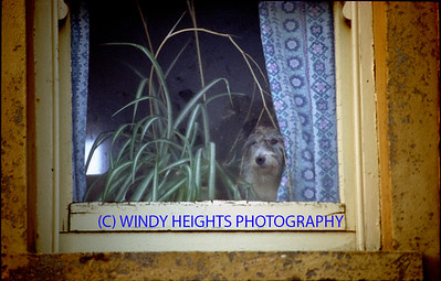 Dog On Window Near Toe Hd  Nov '86 ROC