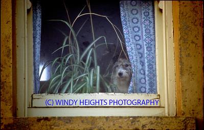 Dog On Window Near Toe Hd  Nov '86 ROC
