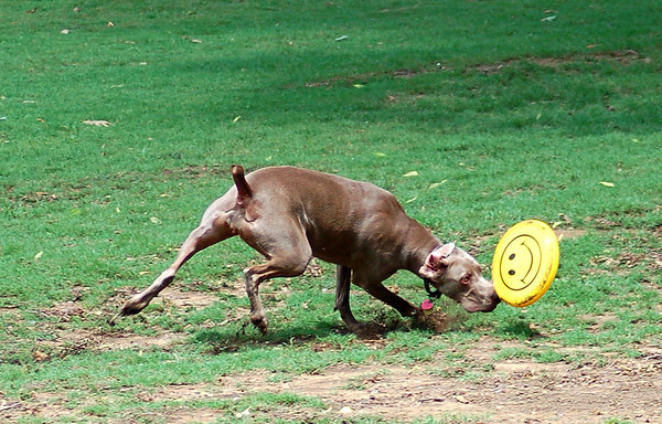 Dog park Action! 7-08