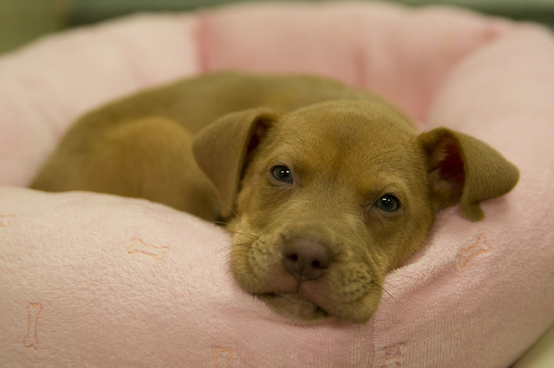 Kristen was the cutest puppy!! No wonder she was adopted before I left the shelter.