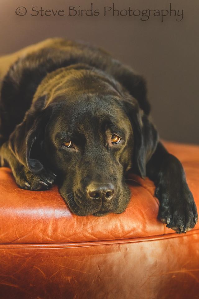 IMAGE: https://photos.smugmug.com/Pets/Dogs-2019/i-x6xVt7W/0/40de2ab1/X2/_U6A0908-2-X2.jpg