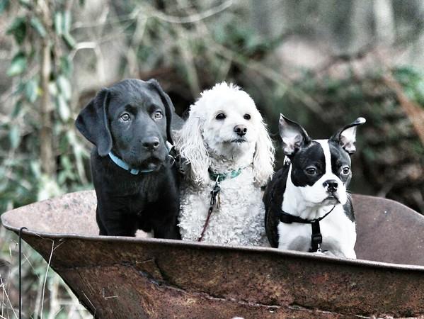 Pets - Nature
