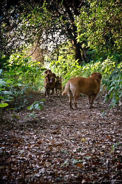 Tycho, Bambi and Max on a walk in the forest
