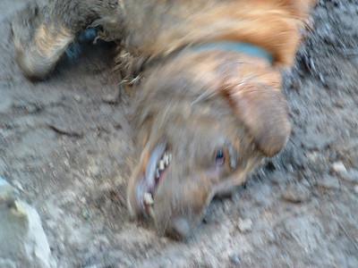 Mud Dog Max