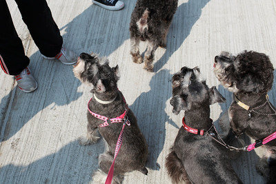 dogs at lamma island