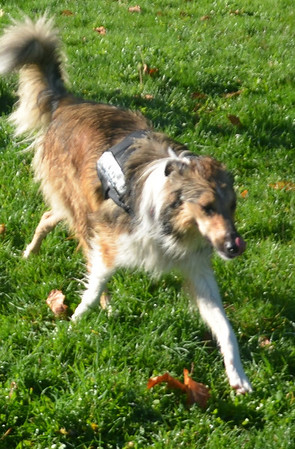 dogs in the park october 2013