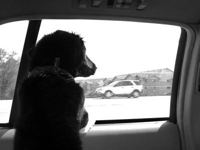 Stare at cars!