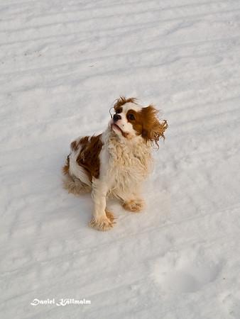 Dino in snow