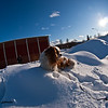 On a pile of snow a sunny day