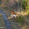 Chasing stick