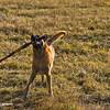 Big stick carrier