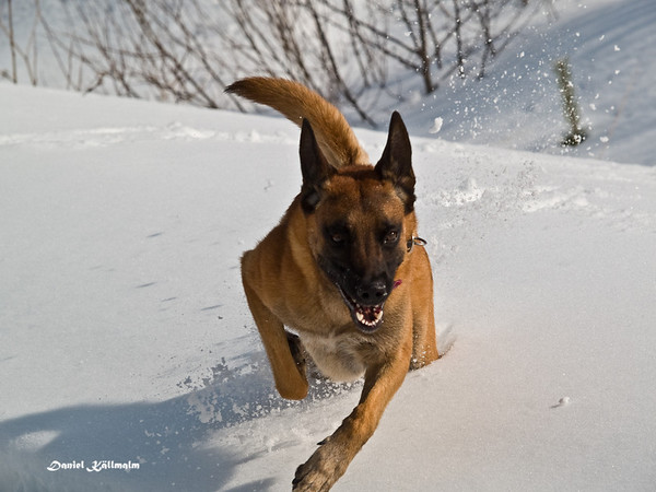 Powerful run in the snow