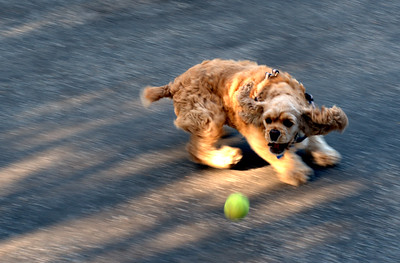 Riley and the Tennis Ball