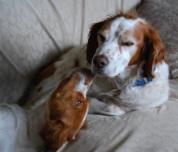 Angel and Beauregarde